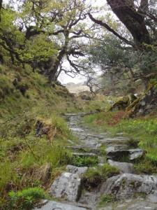 De route is heel afwisselend. Veel loop je door open veld maar ook passeer je af en toe liefelijke groene plekjes.