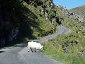 Ballaghbeama Pass, midden op het Iveragh schiereiland