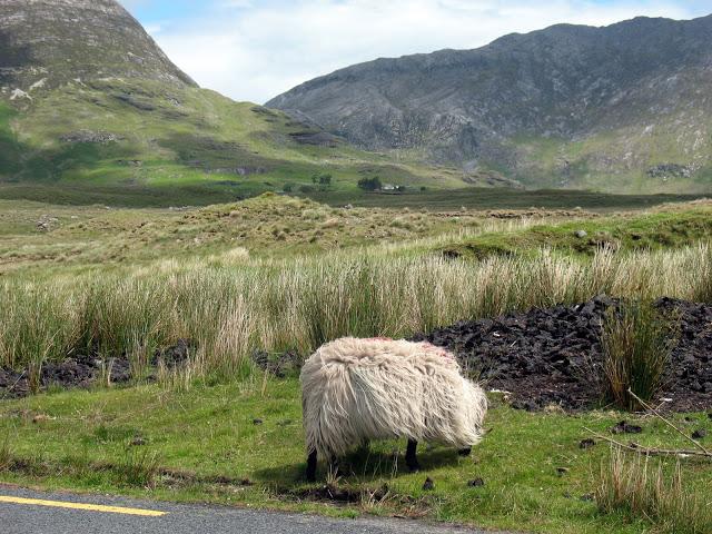 Ook het ruige Connemara wordt tijdens deze rit aangedaan!
