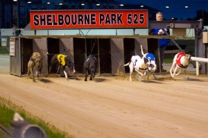 Hondenraces in Shelbourne Park, Dublni