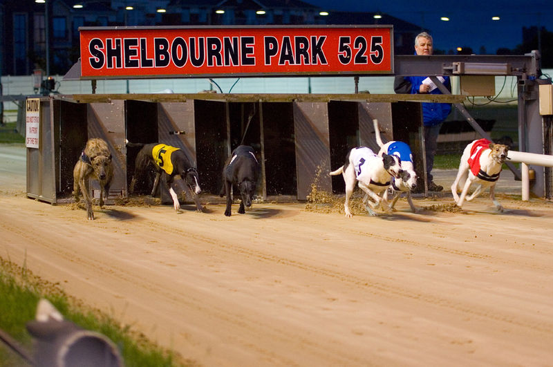 Hondenraces in Shelbourne Park, Dublni